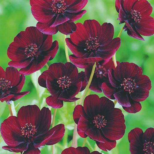 pretty flower wallpaper