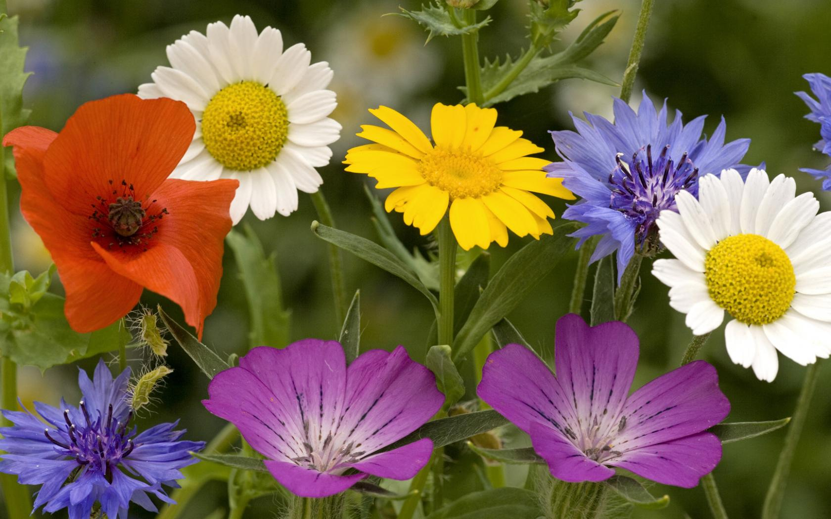 World 39 S Top 100 Beautiful Flowers Images Wallpaper Photos