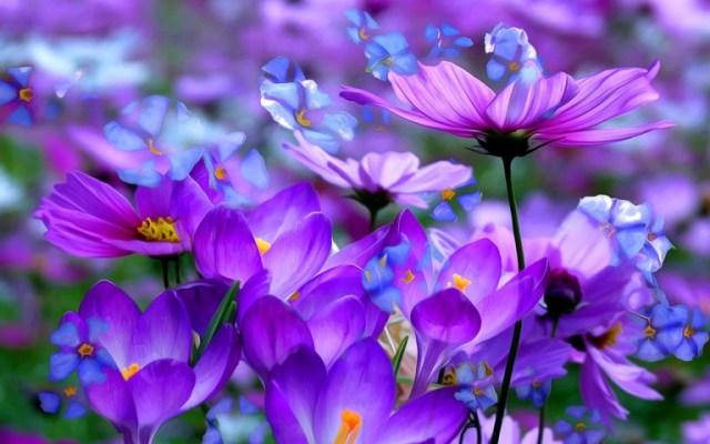 purple flower hd wallpaper
