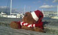 Cürby beim Sonnenbad in Wellington