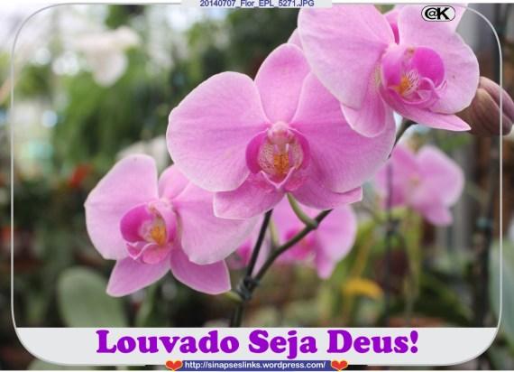 20140707_Flor_EPL_5271