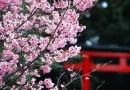 Tâm sự xúc động của du học sinh Nhật làm mẹ đơn thân