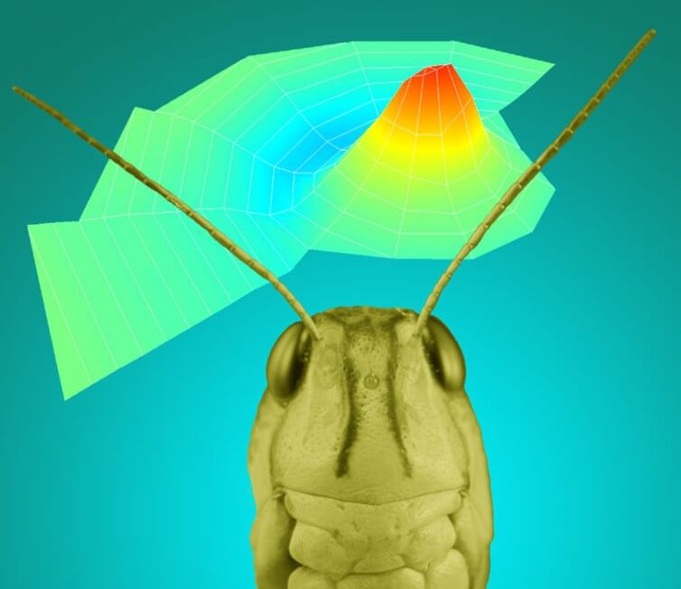 insects-future-of-hearing-aids-2