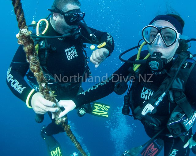 northland_dive
