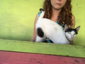 Manky cat