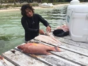 Ed filleting a grouper
