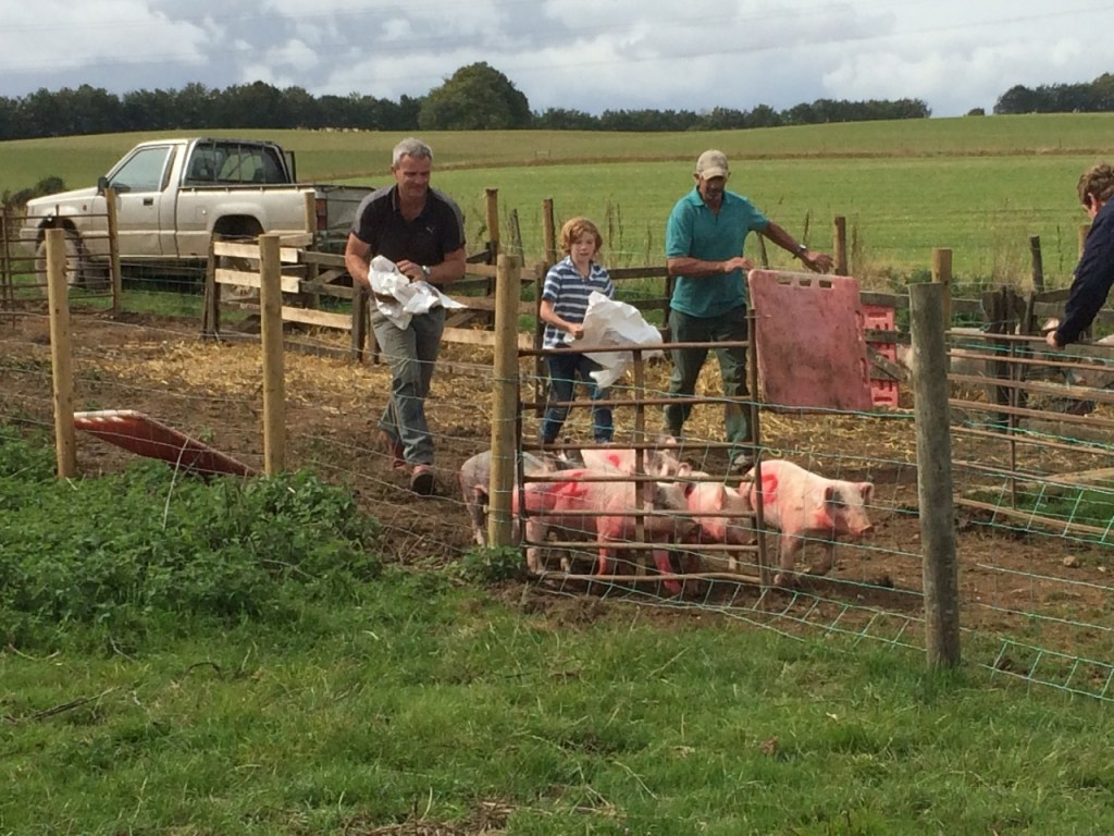 Damerham Pig Racing
