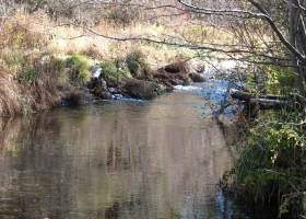 Waterfront land-for sale-French Creek-Scott Valley-private setting-creek-2