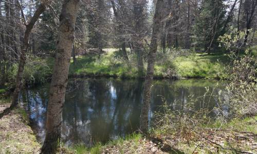 Oro-Fino-land-springs-pond (11)