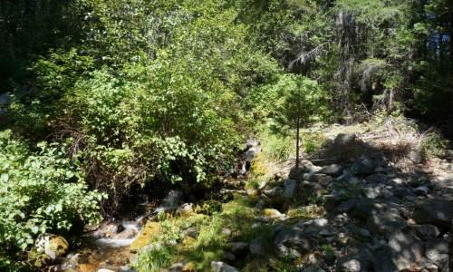 40 acres with creek hammond ranch Black Bear Loop (4)