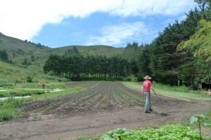 Green Gulch field