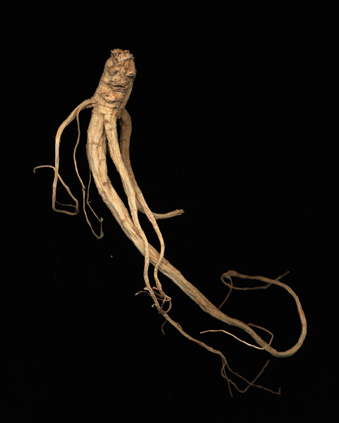 "An example of Evan Lee's work with ginseng roots. ""Ginseng #16."" source: monteclarkgallery.com"