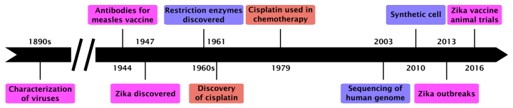 Figure 2: A timeline of discoveries from basic biomedical research and their applications. The characterization of viruses in the 1890s and the knowledge used to purify antibodies for vaccines against measles in 1944 were critical to the quick development of the Zika vaccines currently being tested in animals. Similarily, the discovery of restriction enzymes in the 1960s made it possible to sequence the human genome in the early 2000s and to create the first synthetic cell in 2010. Cisplatin was discovered as a compound that could halt cell division in 1961, and adopted as a drug to prevent the division of cancer cells in tumors in 1979.