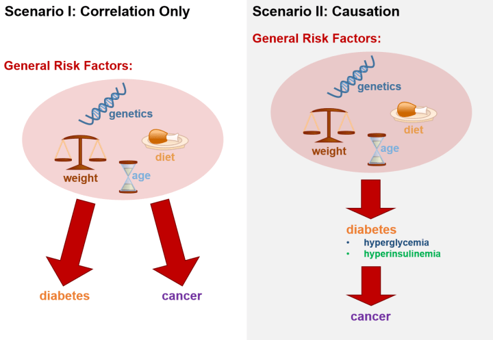 Figure 2: The relationship between cancer and diabetes. Scenario I: Diabetics may have an increased occurrence of cancer because traits that make them susceptible to diabetes also make them susceptible to cancer. Scenario II: Side effects of diabetes, like hyperglycemia and hyperinsulinemia, may directly increase the ability of cancer to grow in a diabetic's body.