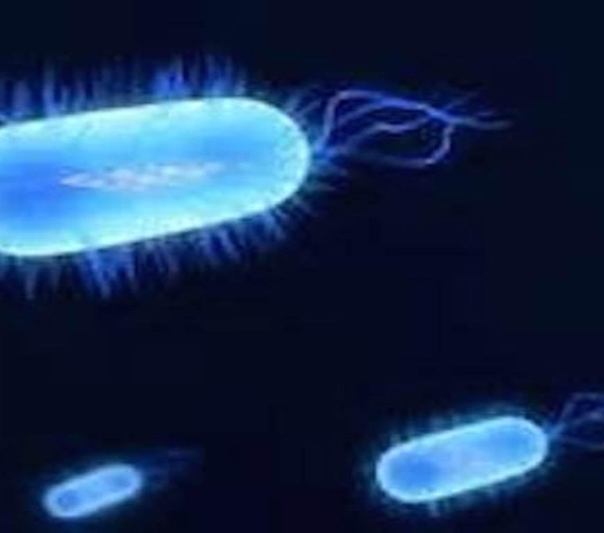 Therapeuticbacteria-1