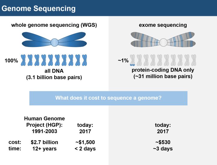 Figure 1: Comparison of genome and exome sequencing technologies. Genome sequencing, or the process of reading every letter of your DNA, was first completed for a human genome in 2003, requiring 12 years of effort, over 200 scientists, and $2.7 billion in total costs. Today, a single scientist can sequence a whole human genome for a mere ~$1,500 over a span of just two days. Exome sequencing, or a modified version of genome sequencing, reads just the ~1% of your genome that produces proteins, making it a cheaper and more direct approach to hone in on the most critical bits of your DNA.