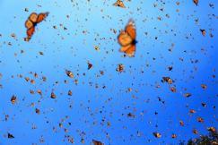 Flight of the Butterflies blue sky shot