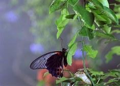 Bugs Butterfly