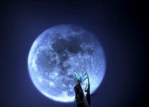 Bugs praying mantis with moon