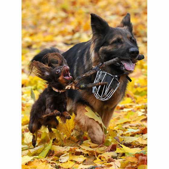 Большая собака резвится с маленькой собакой в желтых листьях в парке Минска, Беларусь