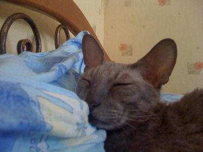 Спящий кот Лаврик