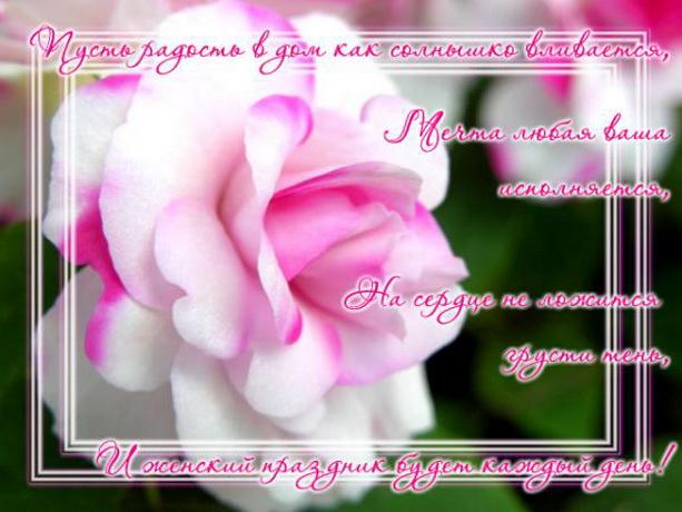 8 марта розы