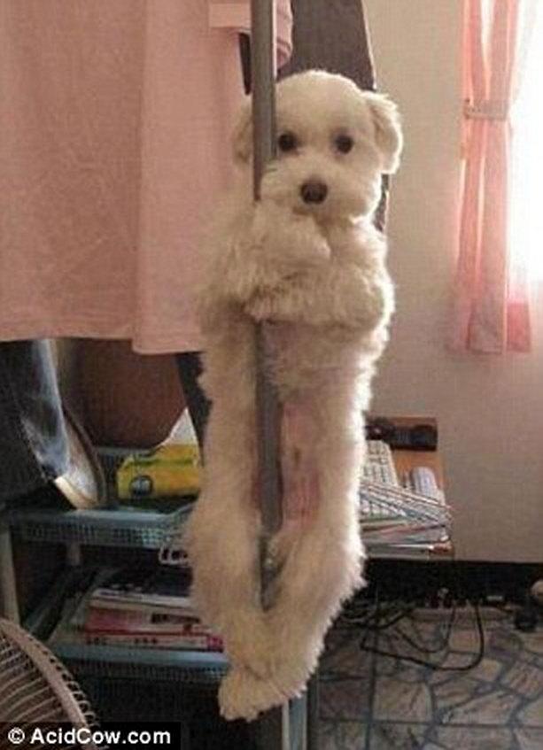 щенок стриптизер