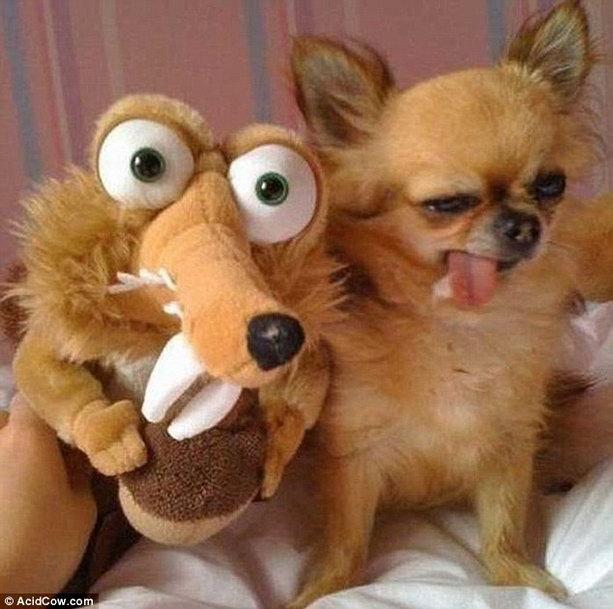 прикольный пес
