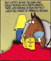 50 Shades of Hay Pic3_n