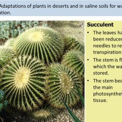 9 1 Transport in the Xylem of Plants Ppt Video Online Download
