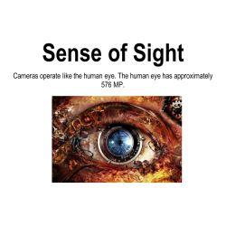 Small Crop Of Sense Of Sight