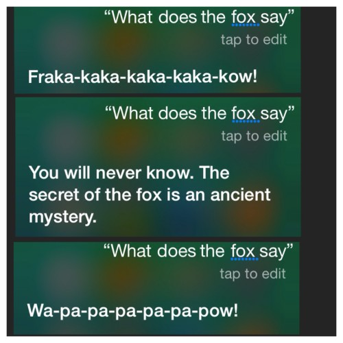 What does the fox say - funny Siri answers