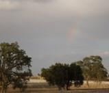 Rainbow over Veris Vineyard