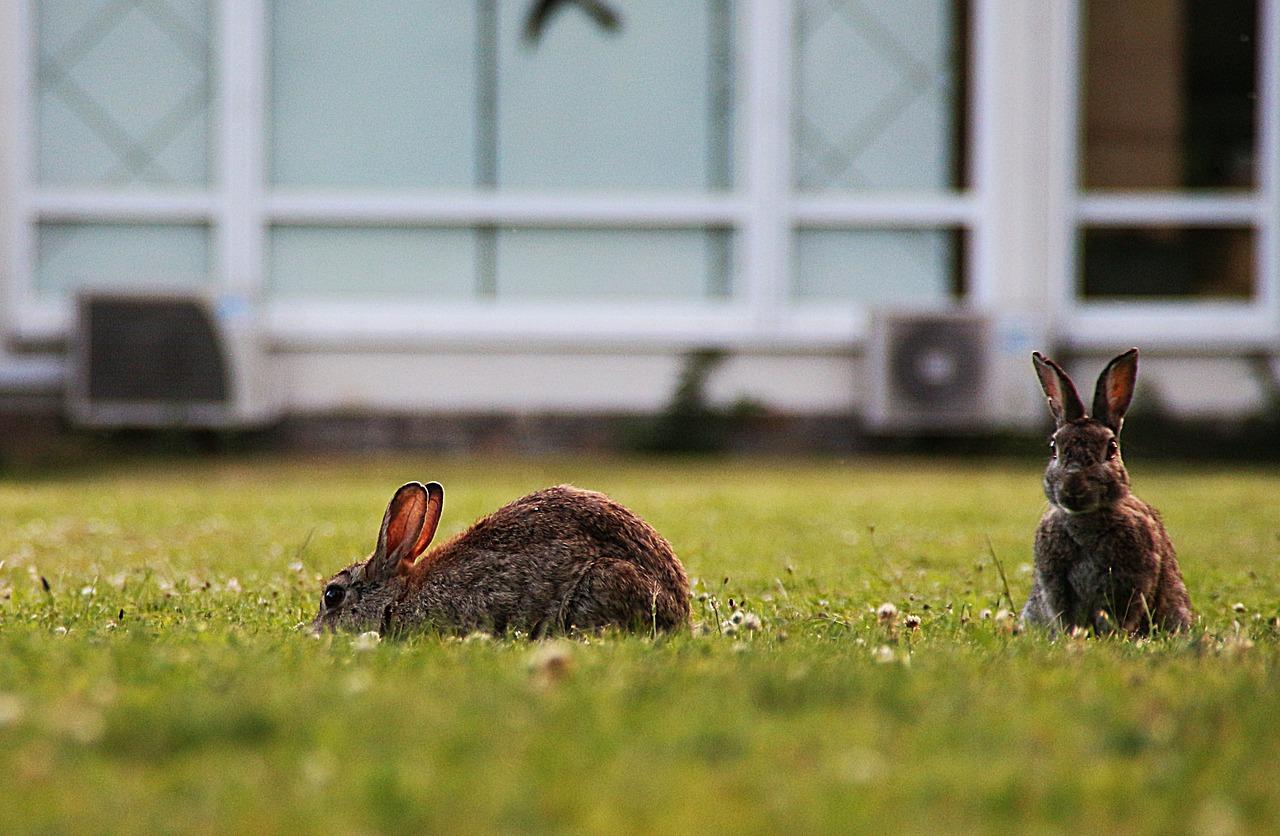 강의와 연구는 두 마리 토끼와 같다