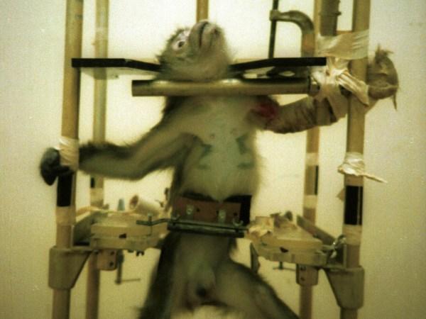 Small-World-Tv-monkey