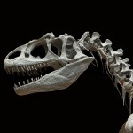 dinosaur-60588_1280