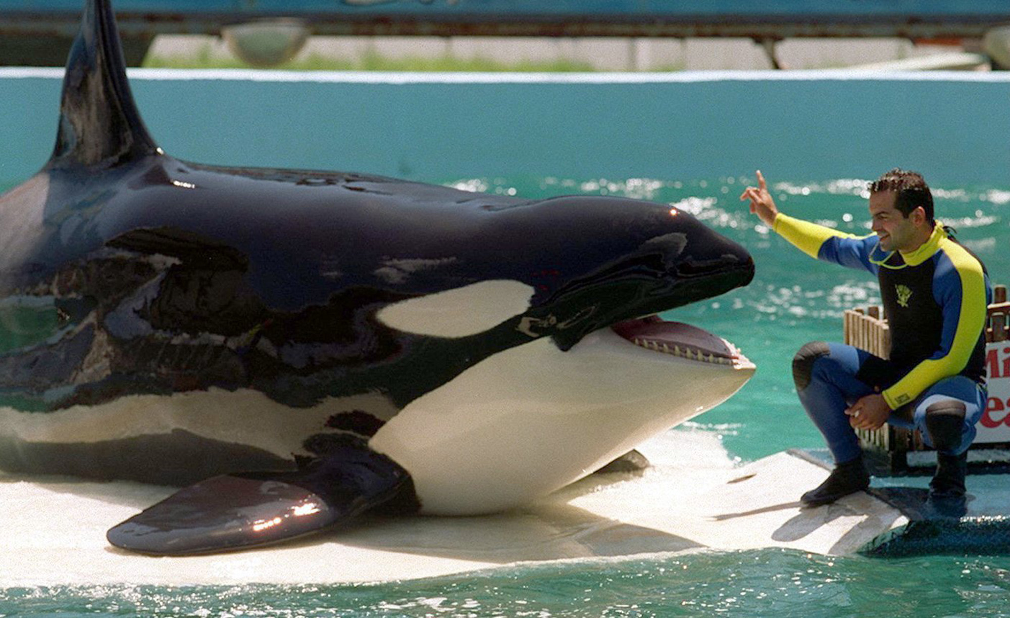 """Blackfish"""" Documentary Fuels Overdue Discussion   The Harbinger Online"""