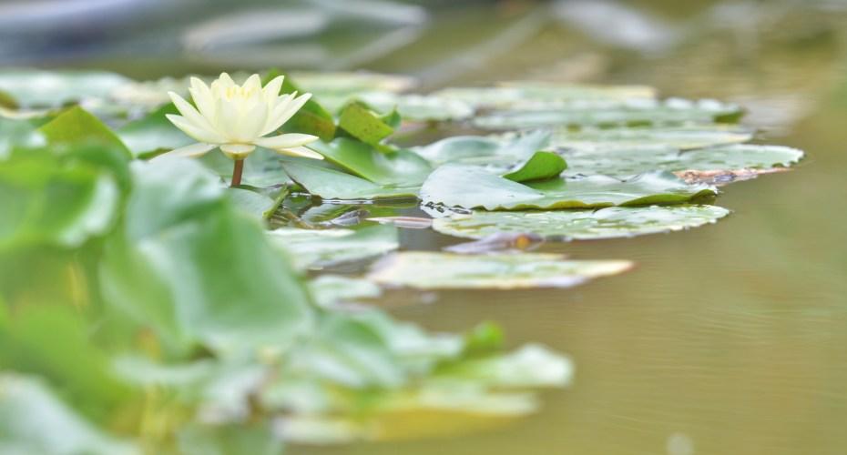 Environmental Education Rain Garden to be Built