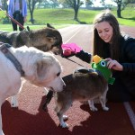 Junior Grace Kenny smiles as other dogs greet her and her own dog after the race. Photo by Ellie Thoma