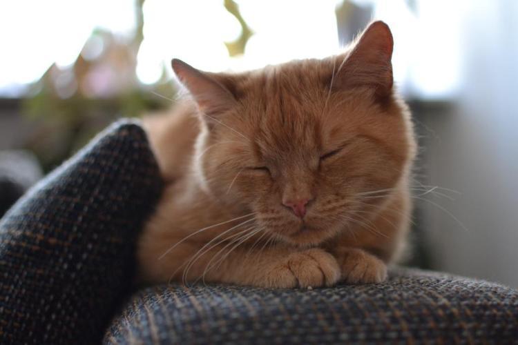 cat-1707092_1920