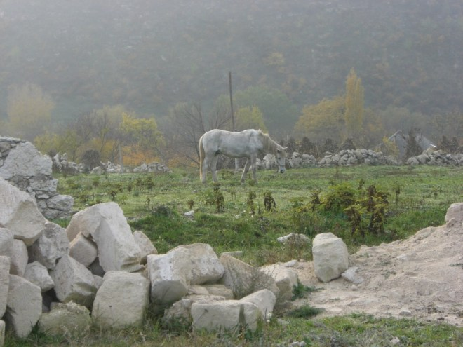 Horse, Orheiul Vechi, Moldova