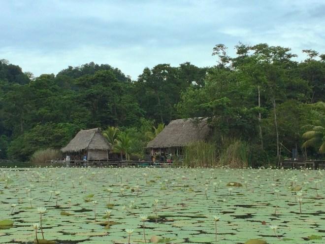 Lilypads on Lake Izabal