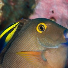 Protecting the Coral Reefs and Tropical Fish of the World