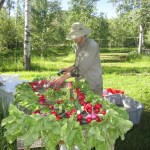 Greg washing radishes
