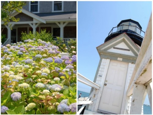 nantucket hydrangeas photography