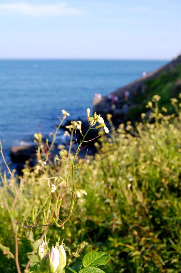newport cliff walk photography