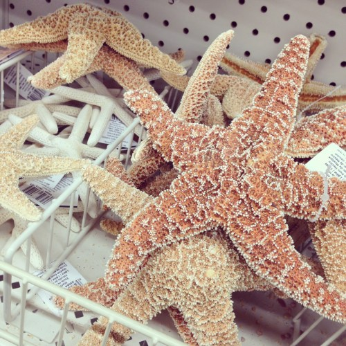 where to buy starfish, shells
