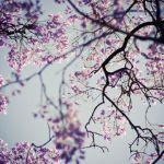 Наби Хазри — Сад камней (из «Японской тетради»)