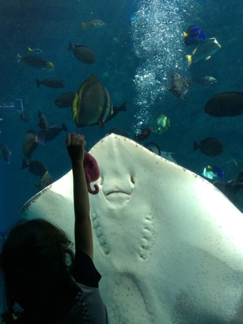 Homeschool Days At The Aquarium Of The Pacific On