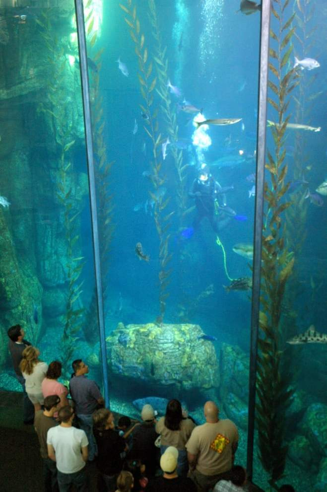 attend homeschool days at the aquarium of the pacific on september 16 and 17 socal field trips